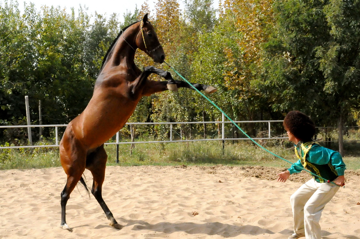 Ахалтекинец Туркменистан (1)