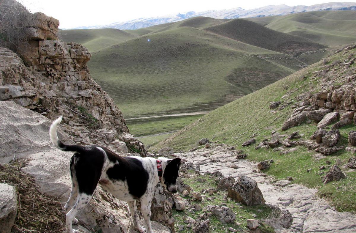 Природа Туркменистан (7)