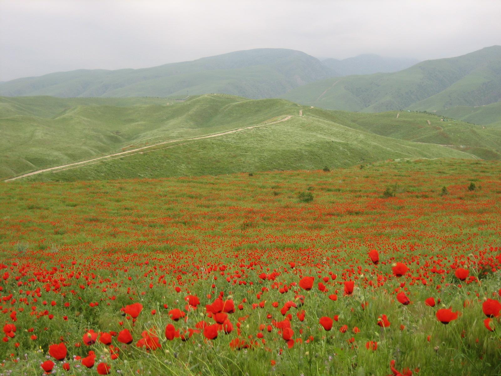 Природа Туркменистан (8)