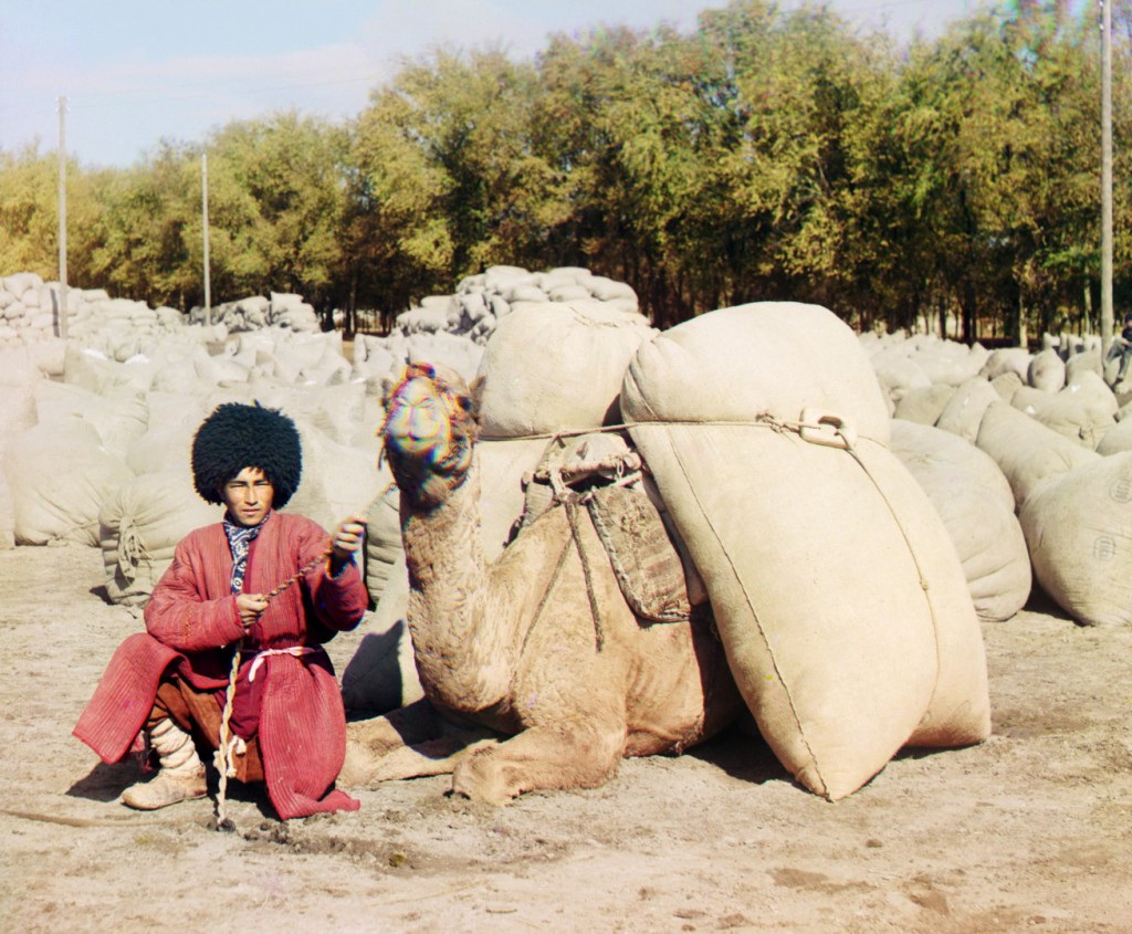 Старое фото, человек с верблюдом