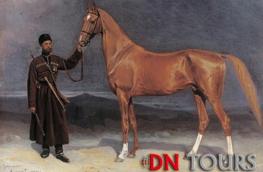 Ахалтекинец порода лошадей Туркменистан (2)