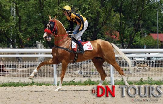 Ахалтекинец порода лошадей Туркменистан