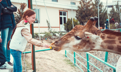 Зоопарк Ашхабада жираф