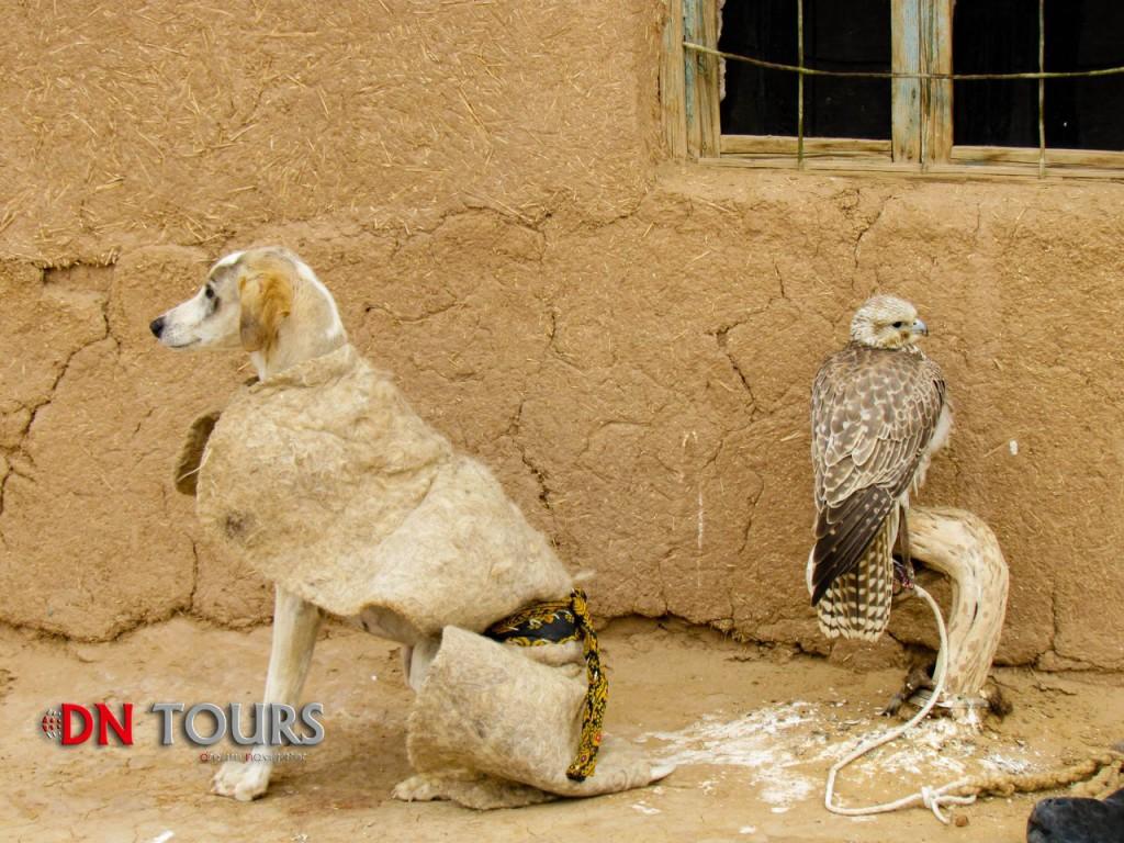 Сокол и собака в деревне Кекирдек