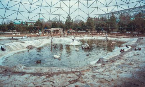 Зоопарк Ашхабада птицы